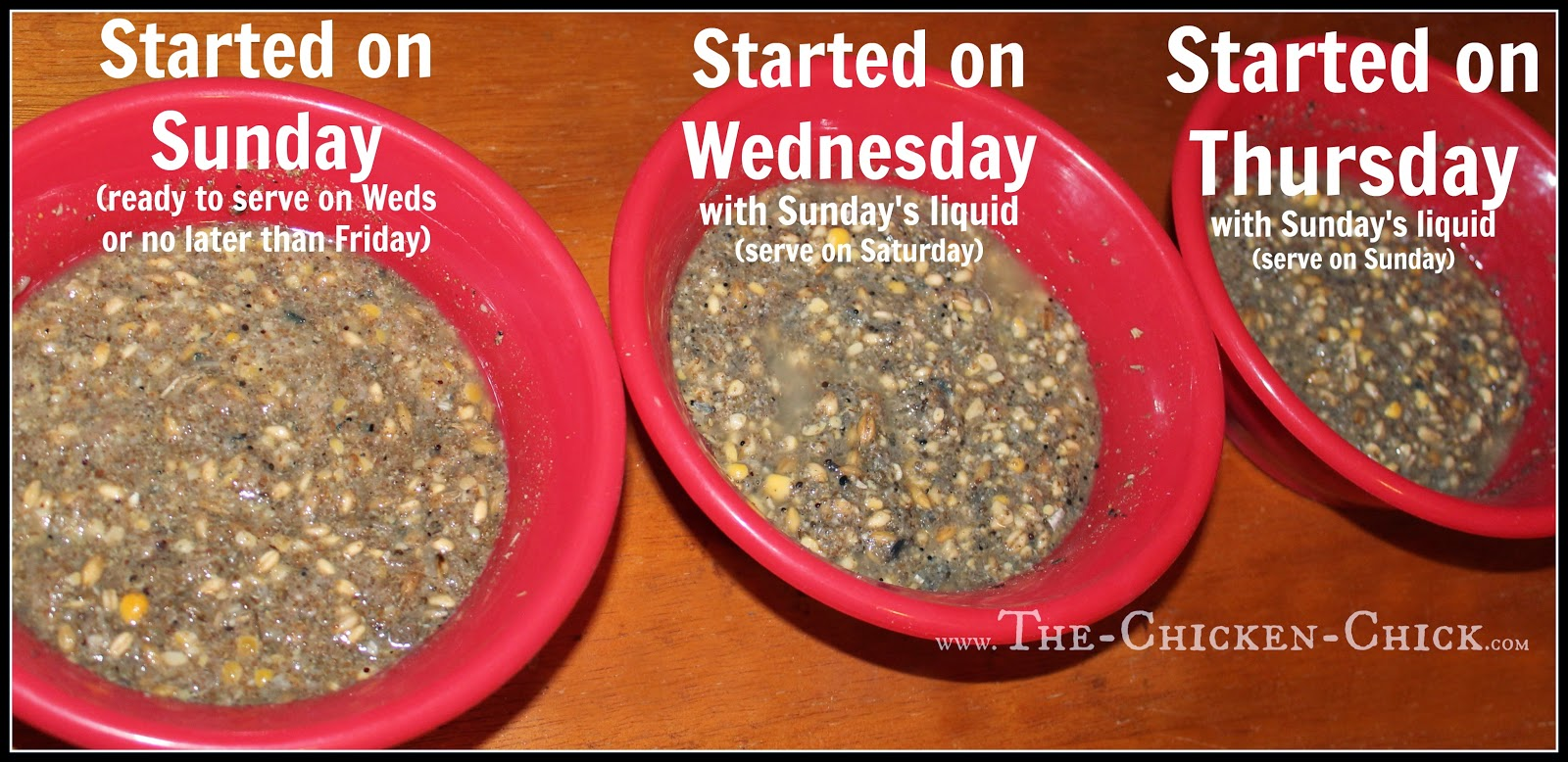 HOW TO FERMENT CHICKEN FEED 3 steps in 3 days!