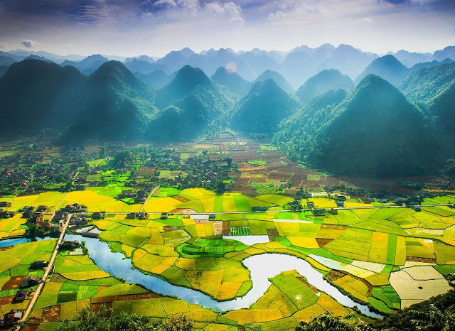 The golden rice fields during harvesting seasons in Northern Vietnam 3