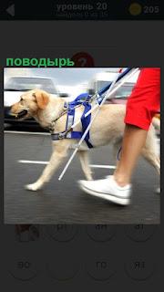 По дороге идет слепой человек держась за собаку поводырь
