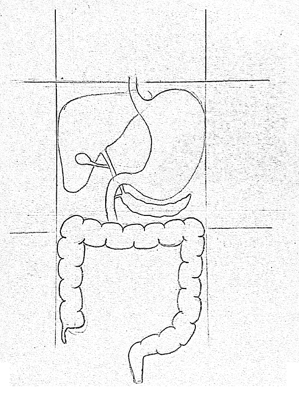 Step By Gallbladder Drawing
