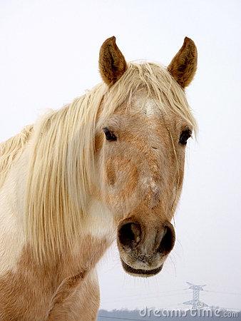 Encyclopedia: Horse face