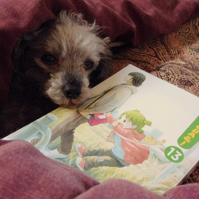 Murchie, a short-haired grey poodle, pokes his face out of a blanket cave. In front of him is a paperback copy of Yotsuba Volume 13. Its cover features a pale-skinned, green-haired small girl leaping into a puddle while a dark-haired Japanese man walks calmly beside her.