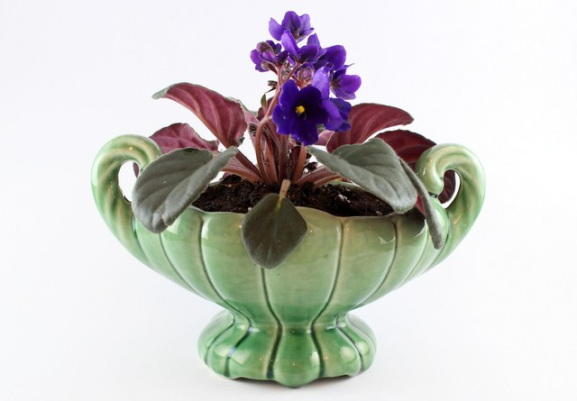 African Violet in a green flower pot