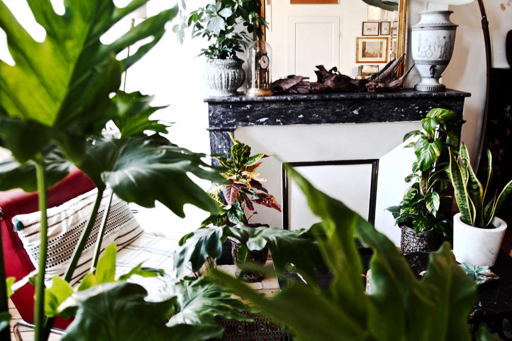 BLOG-MODE-HOMME-DECO-STYLE-INTERIEUR-PLANTES-POUR-MASCULINES-maplantemonbonheur-design-ecolo-vegetal-naturel - scindapsus schefflera croton philodendron monstera langue de belles meres