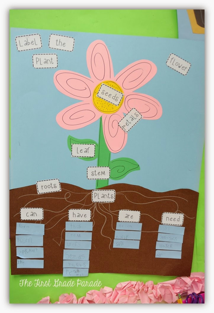 Plant Diagram For Kids Displaying 16 Images For Plant Diagram For Kids