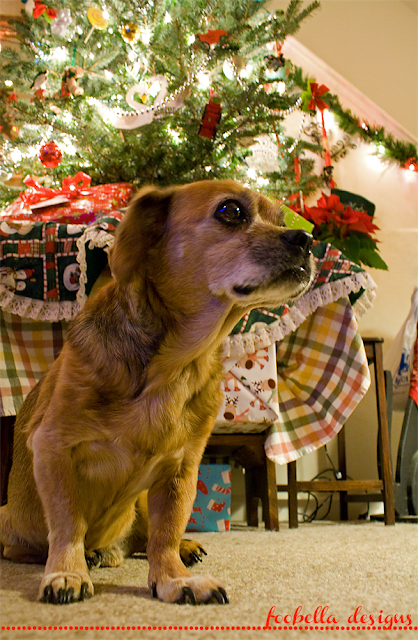 Mr. Magnum the dog and Christmas tree via foobella.blogspot.com
