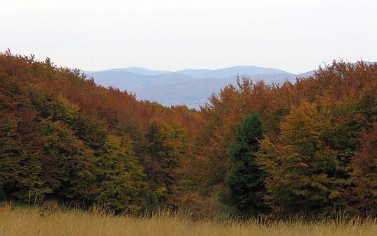 Widok z Łopiennika na południe w stronę pasma granicznego.