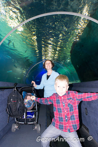 Turkuazoo'daki akvaryum tunelin içinden oğlum ve bebeğimle geçerken, Forum İstanbul AVM
