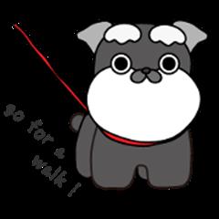 It's a Miniature dog.