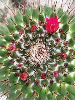 Close up of spiny cactus with red flower
