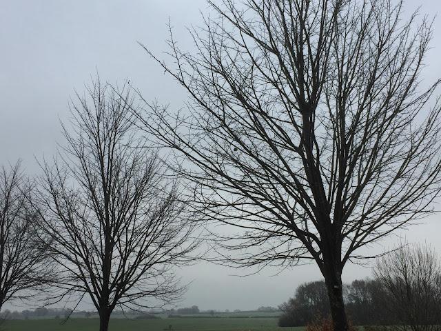 Novemberwetter, alles grau