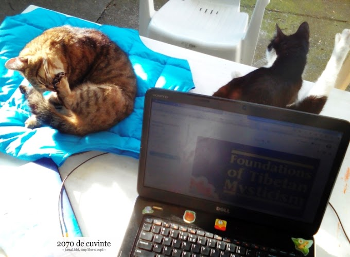 viața cu pisici. yoga pisicească
