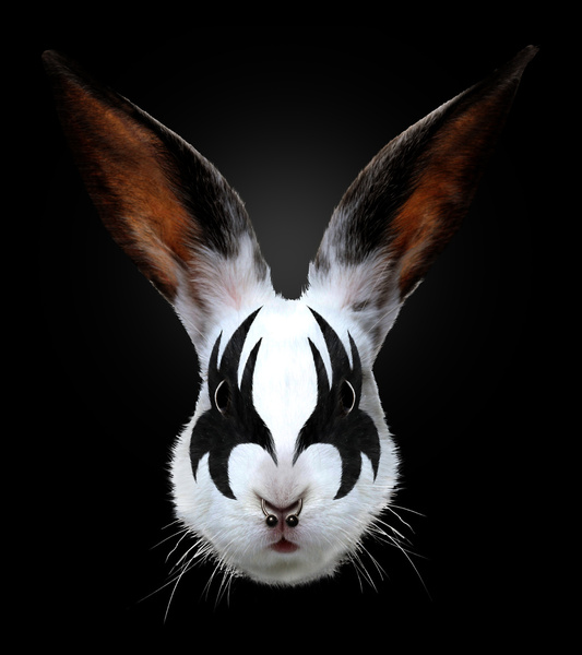 Kiss Rabbit