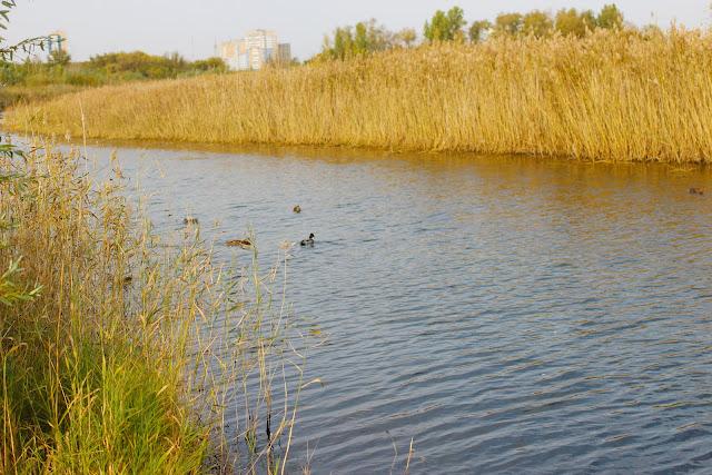 природа, водоем