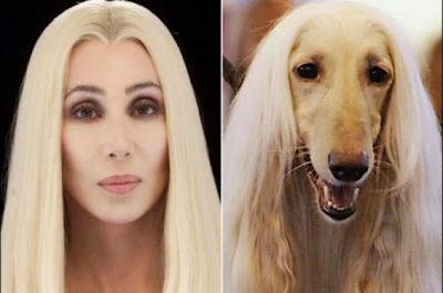 Dogs Who Look Like Celebrities