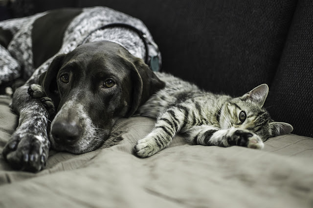 Dog and Cat resting together_Adobe Stock