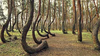 Hutan Rimbun Polandia