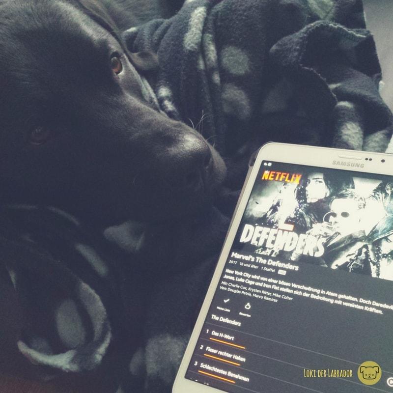 Schwarzer Labrador mit Tablet