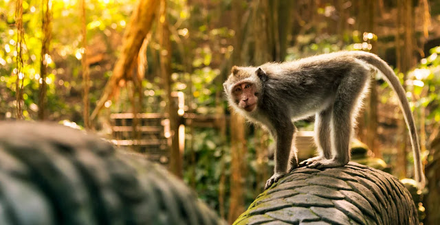 Gambar Monkey Forest Ubud Bali