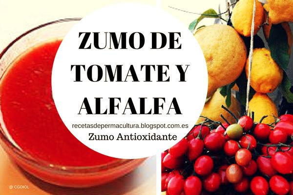 Receta de Zumo antioxidante de Tomate con Alfalfa pura Salud en un Sorbo