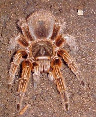 20 معلومة مذهلة عن العناكب