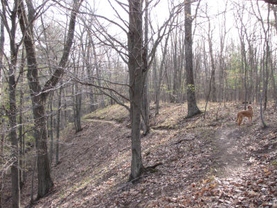 North Country Trail east of Highbridge
