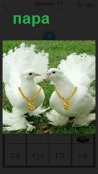 пара голубей с цепочками на шеях клюв к клюву стоят