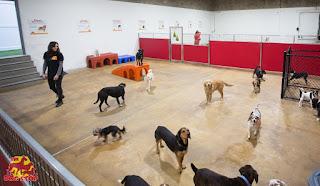 Deléitese en el mantenimiento de mascotas a través de instalaciones de embarque de perros
