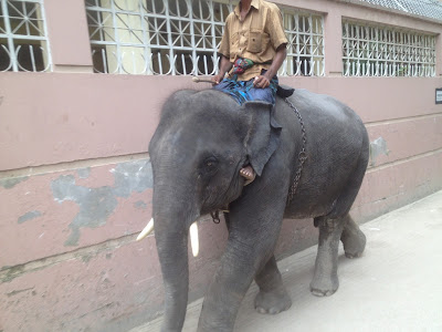 Elephant at town
