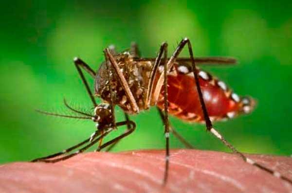 En Tarija afirman que exceso de fumigación crea resistencia en los mosquitos