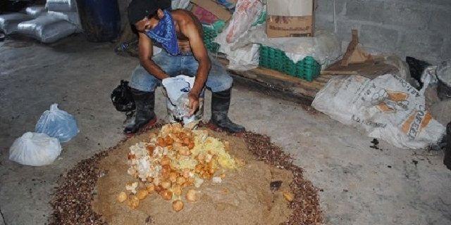 cara membuat pakan ikan apung