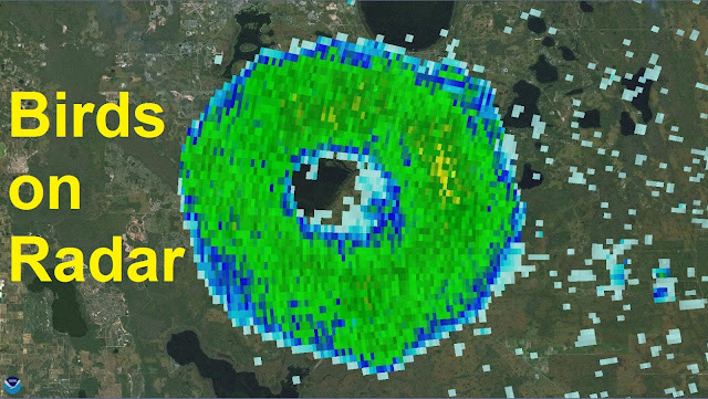 Bird Echoes on Weather Radar