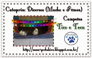 Selinho de campeões do concurso julino do Blog Gam Pet e Cats!