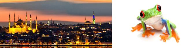 istanbul-veteriner-klinikleri