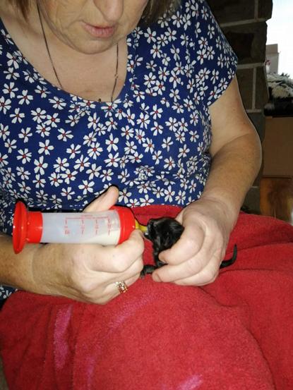 woman bottle feeding tiny black kitten