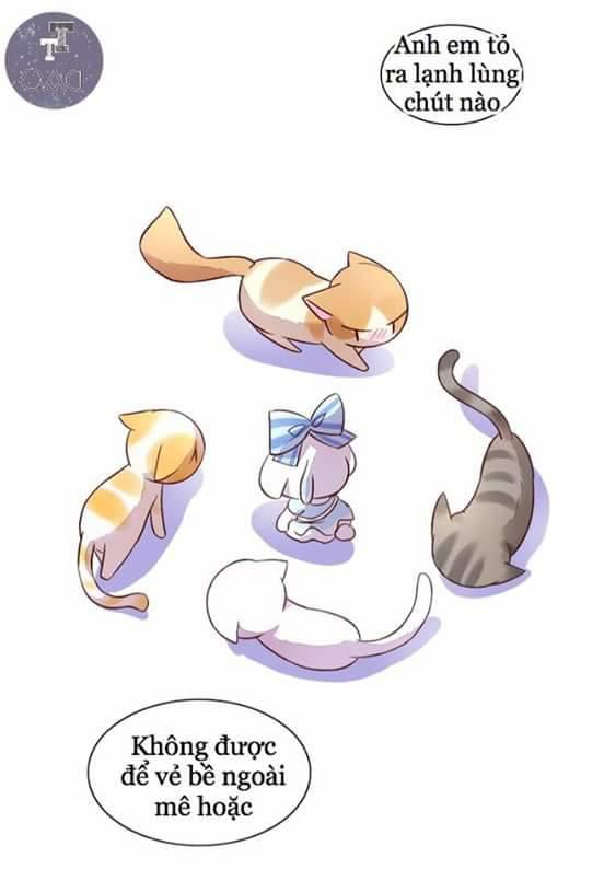 Dưới Móng Vuốt Mèo Chap 5 - Next Chap 6