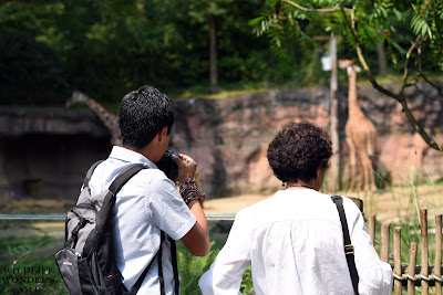 man and woman take pictures of zoo giraffes