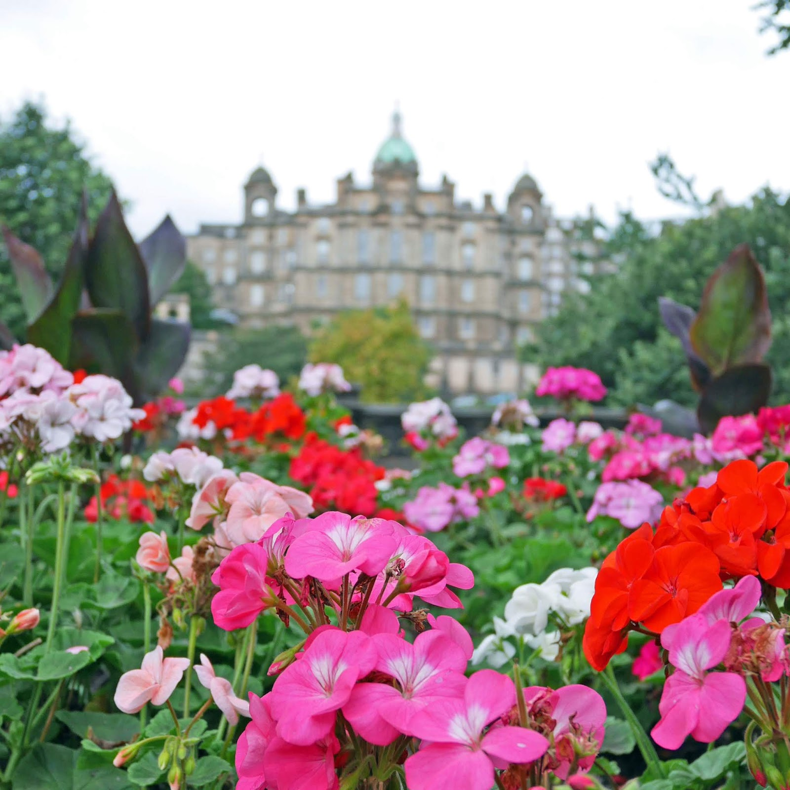 Flowers in Princes Street Gardens, Edinburgh