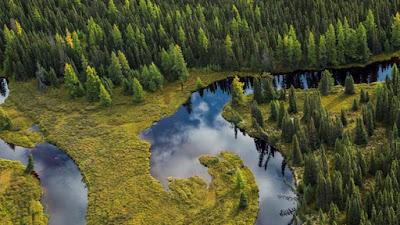 Ekosistem Bioma Hutan Taiga/Boreal di Bumi