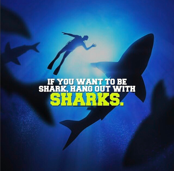 If you want to be a shark hang out with sharks.
