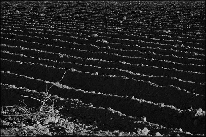 fotografia,cultivo,murcia,tierra,paisaje,naturaleza