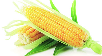 agri commdity tips, Maize NCDEX, maize trading tips, Free  Commodity Tips,