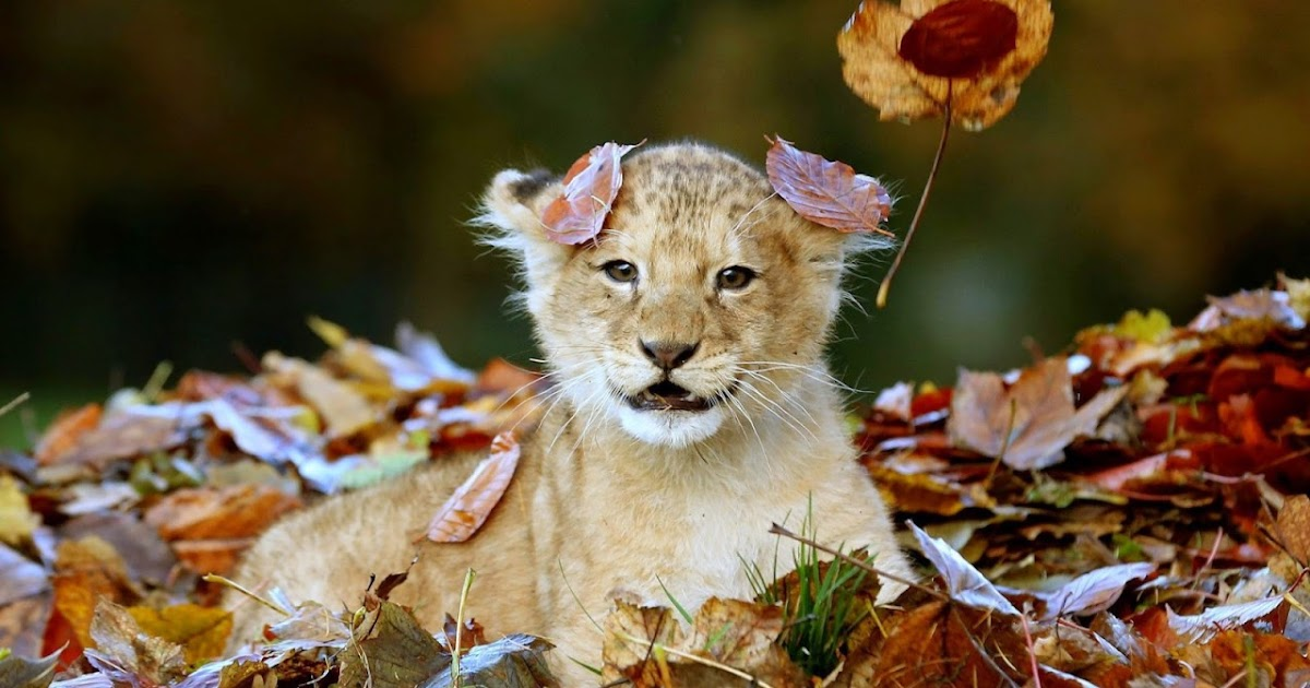 Animal's HD Images Photos Wallpapers free Download: $2019 ...