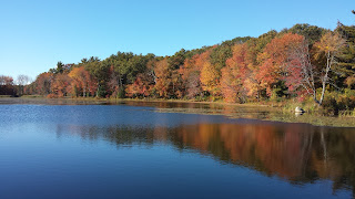 the fall foliage along the DelCarte property