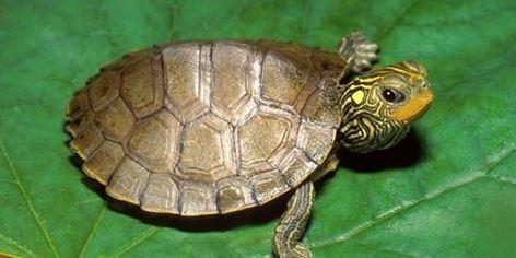 Rùa biểu hiện của sự trường thọ