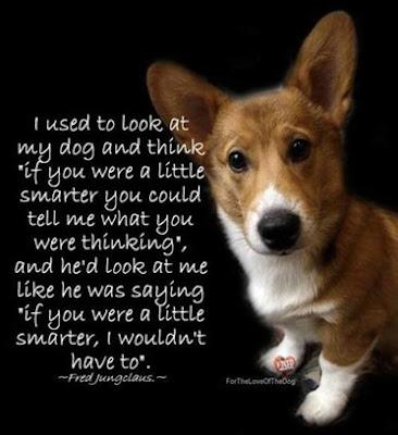 dog smarts