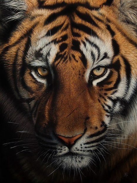 Simply Creative Incredibly Detailed Wildlife Scratchboard