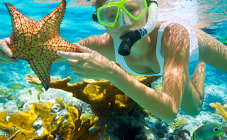 Benefits of marine biology in the maritime world