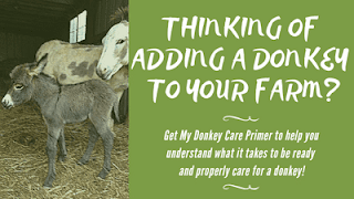 Donkey care ebook! What to know before you bring home a donkey!