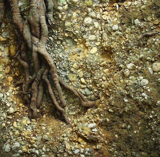 Plantes à racines nues